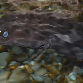 by Rachel Urlich - Animals Fish