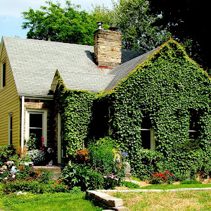 House With Vines.JPG
