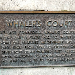 Submitted by @GaelFC WHALER'S COURT THE LAST COMMERCIAL WHALING COMPANY IN THE UNITED STATES HAD TS WINTER HOME ON BELLEVUE'S MEYDENBAUER BAY UNTIL 1942. FROM APRIL TO OCTOBER THE SEVEN BOAT ...