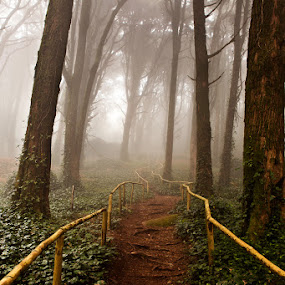 The pathway by Jorge Maia - Landscapes Forests