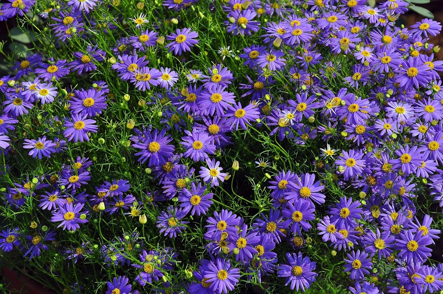 by Debanjan Goswami - Flowers Flower Gardens ( 05-01-2017,  )