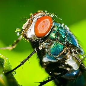 rainy season by Nopri M - Animals Insects & Spiders