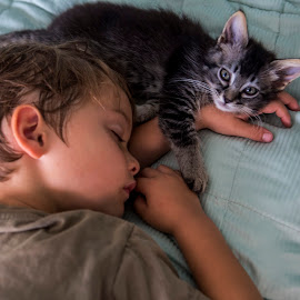 Caught napping by Chris Seaton - Babies & Children Children Candids ( young boy, kitten, cat, snuggling, napping, child,  )