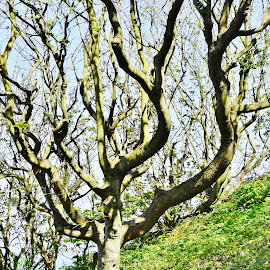Branches  by Eloise Rawling - Nature Up Close Trees & Bushes ( tree, branches )