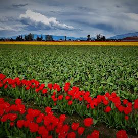 green fields   by Lavonne Ripley - Landscapes Prairies, Meadows & Fields