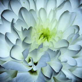 Open your eyes by Hirian Raul - Nature Up Close Flowers - 2011-2013 ( macro, petals, white, yellow, flower )