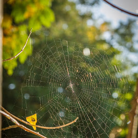 Webbed Bokeh by Sarah Scully - Nature Up Close Webs ( wisconsin, nature, door county, fall, web, spider, landscapes, flowers, bokeh, spider web )