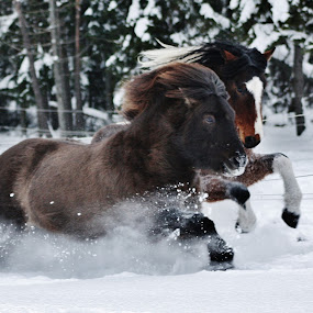 WinterFun by Minna Mäkinen - Animals Horses