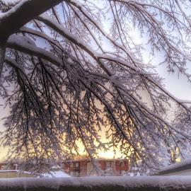 Sunset in Melrose Mass by Paul Gibson - Instagram & Mobile iPhone ( winter, tree, hdr, sunset, snow, massachusetts )