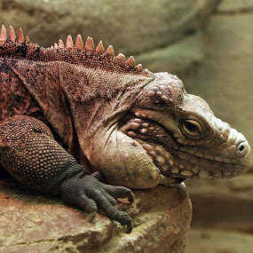 by Indra Fardhani - Animals Reptiles (  )
