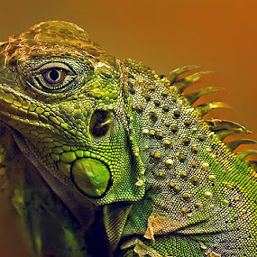 Handsome by Cheri McEachin - Animals Reptiles
