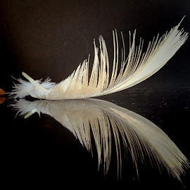 Feather by Janette Ho - Artistic Objects Still Life