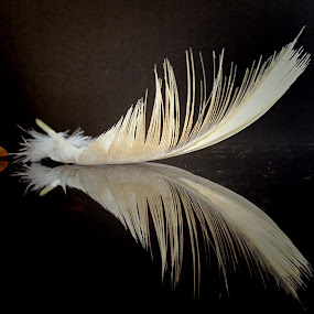 Feather by Janette Ho - Artistic Objects Still Life (  )