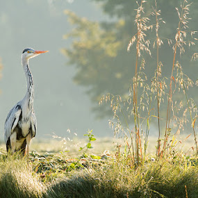 by Lukáš Lang - Animals Birds (  )
