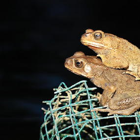 Positive thinking by Adi Mumun'k - Animals Amphibians ( water, dam, postive, natural, animal )
