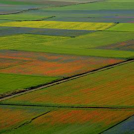Castelluccio 17 by Bruno Brunetti - Landscapes Prairies, Meadows & Fields ( nature, colors, flowers, italy, castelluccio,  )