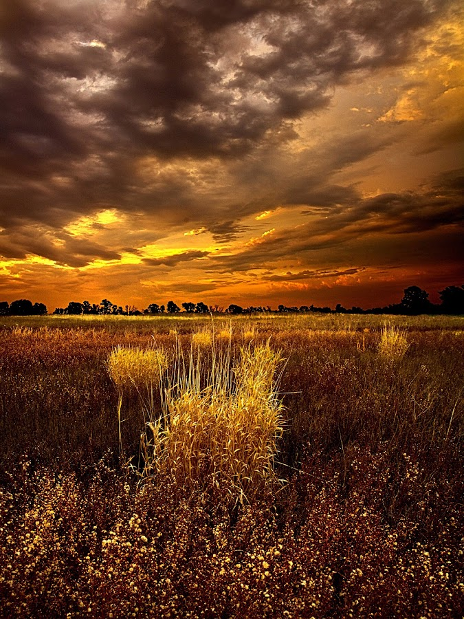 Continuance by Phil Koch - Landscapes Prairies, Meadows & Fields ( summer. spring, wisconsin, vertical, natural light, photograph, environement, farmland, yellow, phil koch, leaves, spring, sun, photography, love, farm, nature, autumn, horizons, flowers, inspired, clouds, office, orange, green, twilight, agriculture, horizon, myhorizonart, scenic, morning, portrait, field, winter, red, seasons, blue, national geographic, serene, sunset, peace, fall, meadow, earth, sunrise, landscapes, floral, inspirational,  )