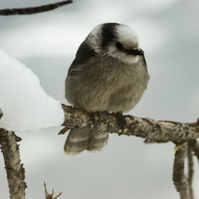 Birds 1 by Hunter Bryant - Novices Only Wildlife ( winter, snow, birds )