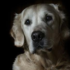 by Vladimir Jablanov - Animals - Dogs Portraits