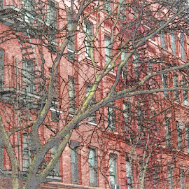 red buildings by Edward Gold - Digital Art Things ( red, fire escapes, red buildings, brown, black lined, windows, trees )