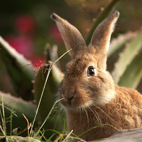 Rabbit by Cristobal Garciaferro Rubio - Animals Other Mammals ( rabbit, grass, beauty, bokeh, animal )
