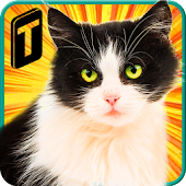 Game Street Cat Sim 2016 APK for Windows Phone