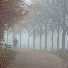 Lonely walk by Stephanie Veronique - Landscapes Forests ( autumn, fog, trees, lines, poeple, morning, early )