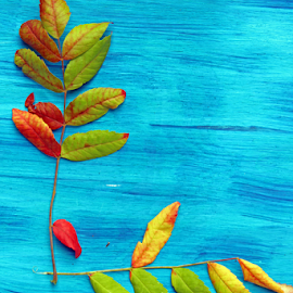 Autumn leaves  by Dipali S - Nature Up Close Leaves & Grasses ( old, surface, wood, yellow, leaf, space, leaves, backdrop, nature, autumn, border, copy, text, autumnal, texture, art, beautiful, white, red, wooden, blue, horizontal, textured, fall, background, brown, design )