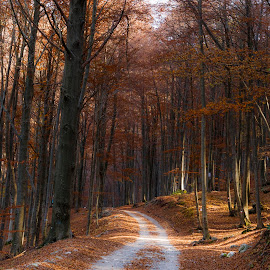 A walk in the forest by Pietro Ebner - Landscapes Forests ( autumn, fall, path, forest, yellow, leaves, walk )