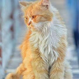 sad cat by Mohamed Mahdy - Animals - Cats Portraits ( cats, cat, saddle, sadness, sad, portrait, animal )