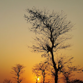 Sun Set Behind Bare Trees. by Prasun Biswas - Landscapes Forests