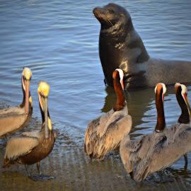 We Love Fish by Craig Carter - Animals Other ( seals, seashore, seagull, sea lion, sea, seagulls, ocean, seascape, birds, mammal )