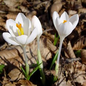 by Drazen Jezic - Novices Only Flowers & Plants