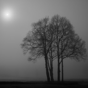 Foggy morning by Morten Gustavsen - Landscapes Forests ( tree, black and white, fog, silhouette, morning )