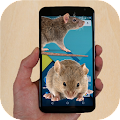 Mouse run in phone Prank APK for Kindle Fire