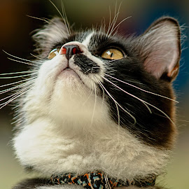 by Robert Cinega - Animals - Cats Portraits