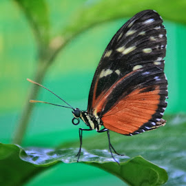 Butterfly by Margie Troyer - Animals Insects & Spiders
