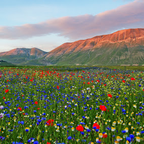La Fiorita by Francesco Riccardo Iacomino - Landscapes Mountains & Hills ( umbria, flowering, norcia, landscape, flowers, italy, flower, castelluccio )