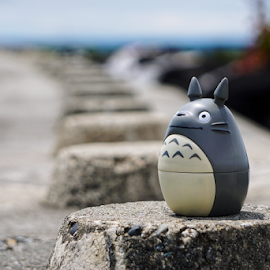 Totoro  by Todd Reynolds - Artistic Objects Still Life