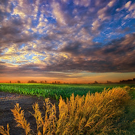 At First Blush by Phil Koch - Landscapes Prairies, Meadows & Fields ( vertical, farmland, travel, yellow, leaves, sky, nature, tree, weather, perspective, flowers, light, orange, twilight, art, agriculture, journey, horizon, portrait, environment, dawn, season, serene, trees, lines, natural, inspirational, wisconsin, ray, country living, beauty, landscape, phil koch, spring, sun, photography, farm, country life, horizons, inspired, clouds, office, park, heaven, green, beautiful, scenic, morning, shadows, field, red, blue, sunset, amber, meadow, summer, beam, earth, sunrise, garden )