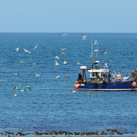 Homeward Genesis by DJ Cockburn - Transportation Boats ( genesis, northumberland coast aonb, trawler, north sea, england, seagull, northumberland, seahouses, hl 1065, fishing, boat )