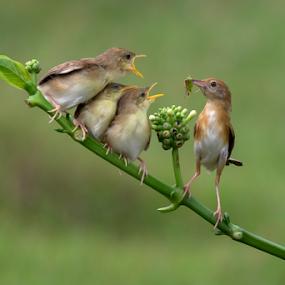 feeding  by Esther Pupung - Animals Birds
