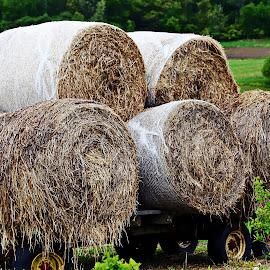 hay on wagon by Jon Radtke - Landscapes Prairies, Meadows & Fields ( hay on wagon )