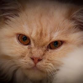 My Puteh Potrait by Eeezam Mon - Animals - Cats Portraits