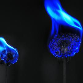 Blue flame  by Todd Reynolds - Digital Art Things