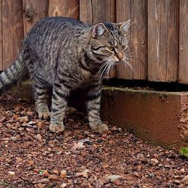 by Robert Benčík - Animals - Cats Kittens