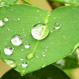 RAIN DROP AT LEAF by Ajit Kumar Majhi - Nature Up Close Leaves & Grasses