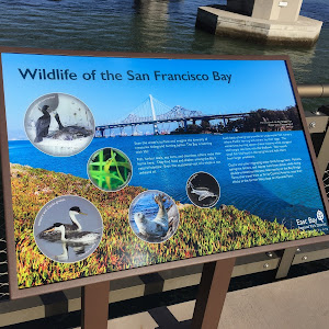 Wildlife of the San Francisco Bay