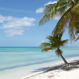 Dominican Republic by Emma Thompson - Landscapes Beaches ( palm trees, beach, paradise, caribbean )