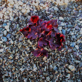 Rock Flower by Nancy Bowen - Novices Only Flowers & Plants ( plant, red, rock background )